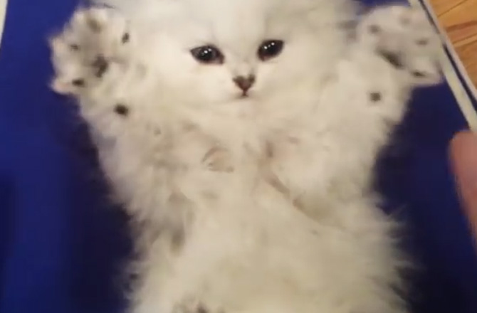 širi fotografije maca preuzmi besplatni porno film bez kreditne kartice