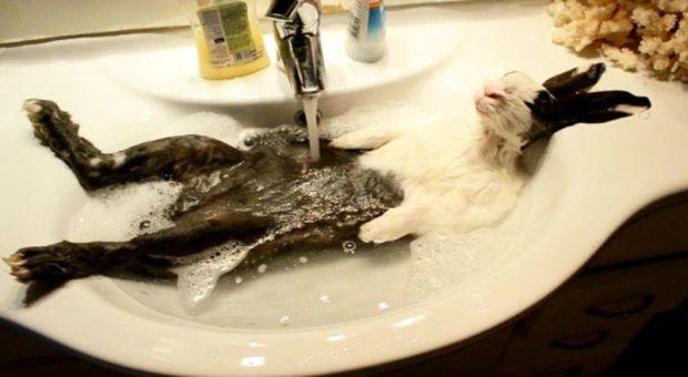 Картинки по запросу животные в ванной