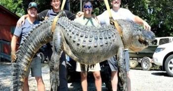 krokodil-meci-1